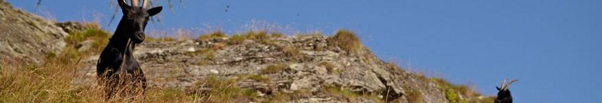 Monti Doro