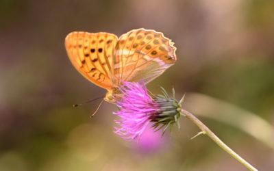 Artenvielfalts-Projekt