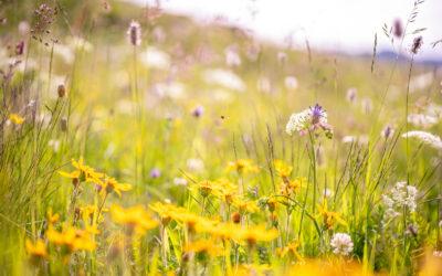 Biodiversitätsprojekt – Zwischenbericht 2020